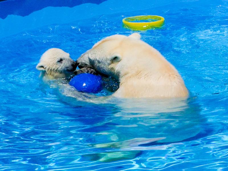 母ララと赤ちゃんホッキョクグマ