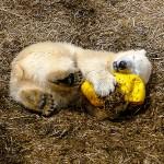 やっぱり黄色いボールが気になるんだい