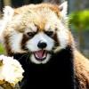 ホクトのもぐもぐタイム・・・円山動物園