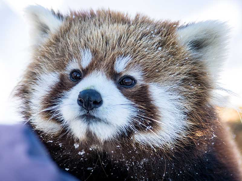円山動物園のホクト