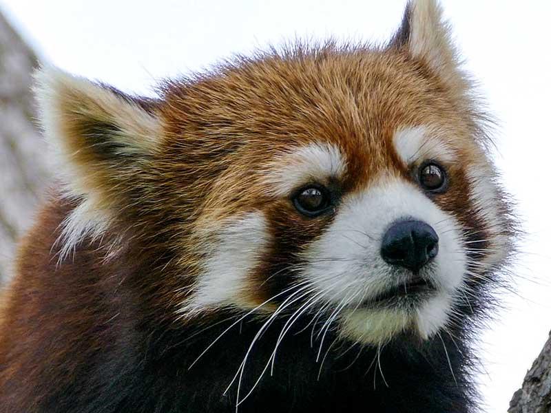 円山動物園のキン