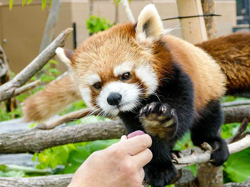 円山動物園のギン