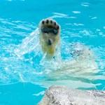 水面に飛び出るかわいい肉球