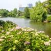 中島公園のオシドリの子供たち