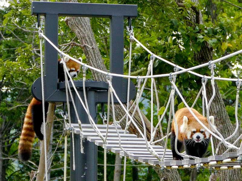 キンとギンの吊り橋ウォーク