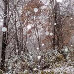 わっく〜♪ 雪でっせぇ〜!
