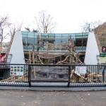 円山動物園の新しい猿山