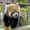 結果にコミット・・・かな? 円山動物園のお子ちゃまホクト