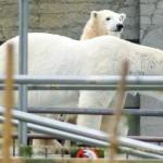 世界の熊館観覧禁止・・・ララとリラが見られない
