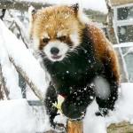 雪が20cm積もるとセイタは草と格闘する
