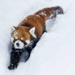 雪降ってエイタはじける