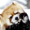 雪遊び・・・ギン