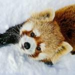 ふわふわの雪が積もったら・・・・・・ギン