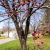 春の中島公園
