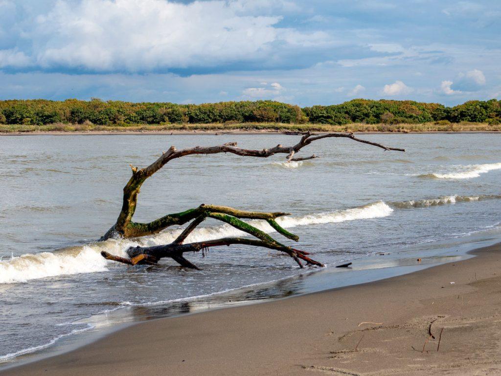 石狩湾河口